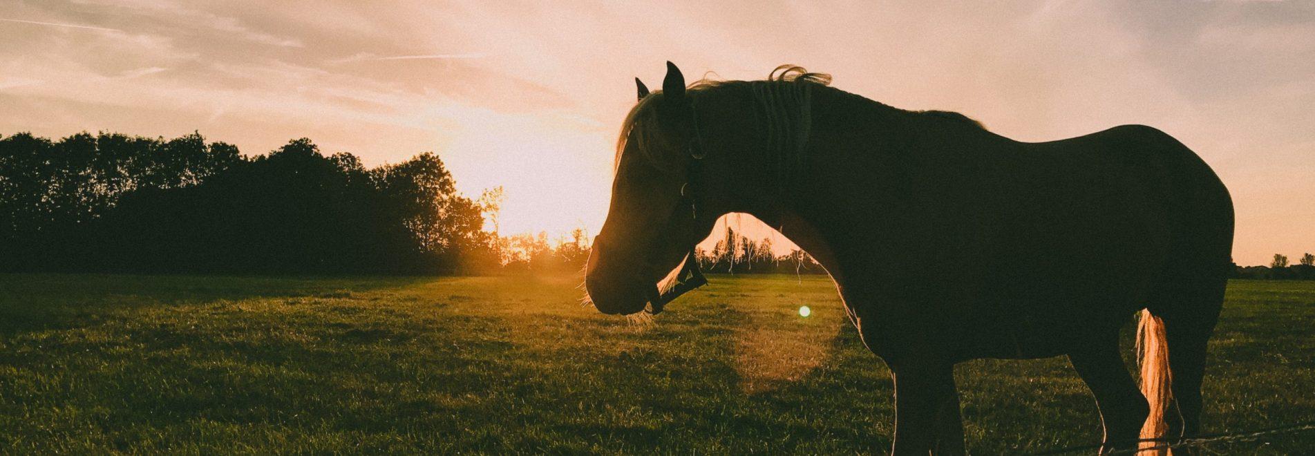 Pferd&Land