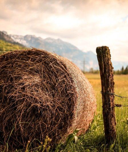 Pferdefütterung - das Heu macht's aus