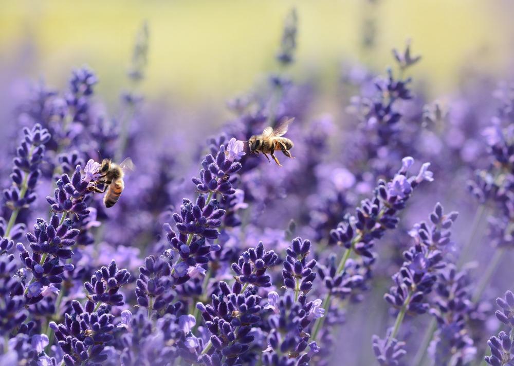 Naturschutz hilft vor allem den Bienen