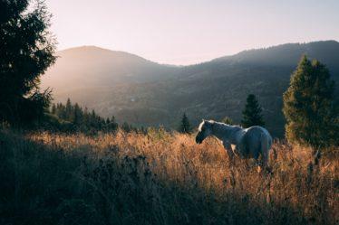 Die Haltung eines alten Pferd