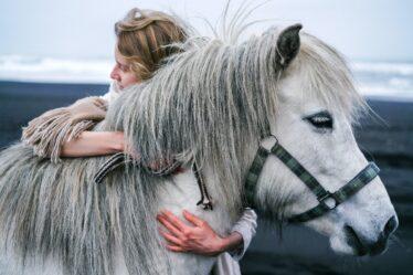 Pferde online kaufen: Das Traumpferd online finden