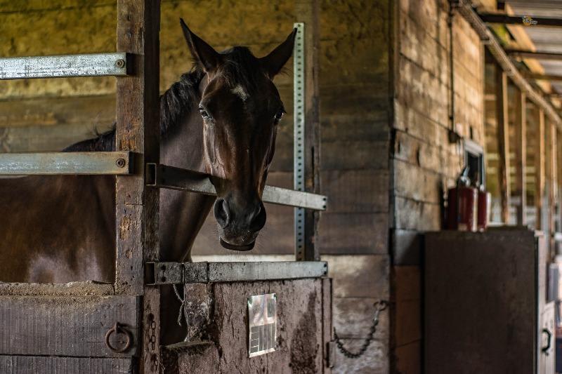 Pferde online kaufen: aber nur mit den richtigen Bildern